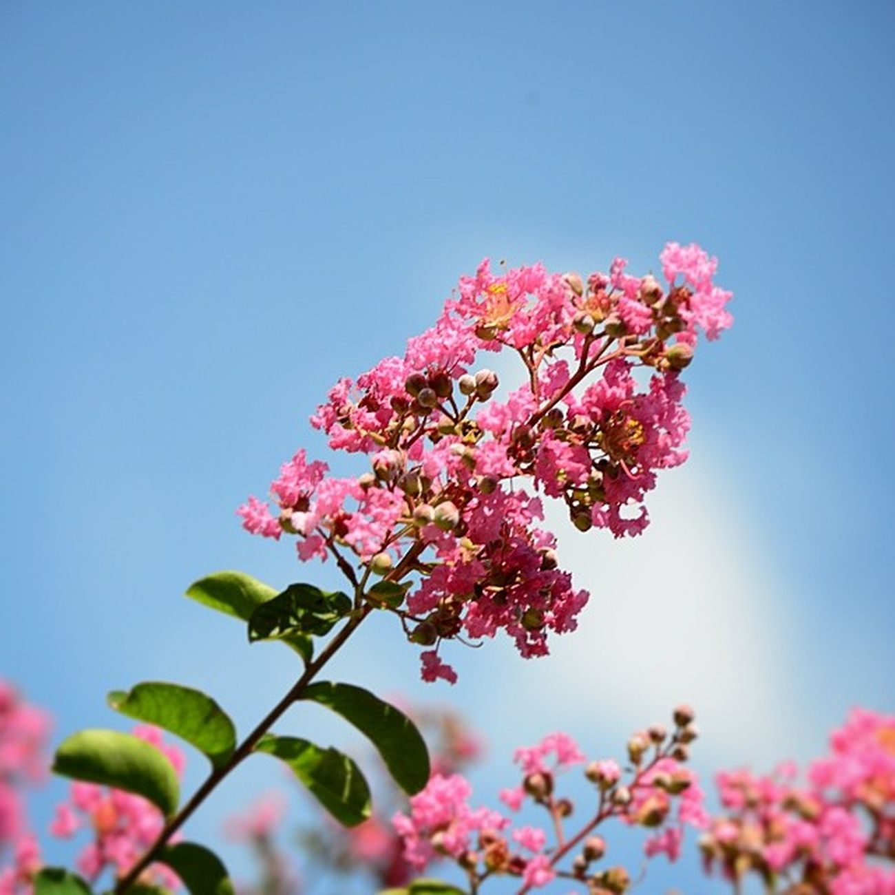Saü Kampüs! Sau Sau Sakarya Sakaryauniversitesi çiçek flower flowers pic picoftheday photo sky photooftheday photos picture