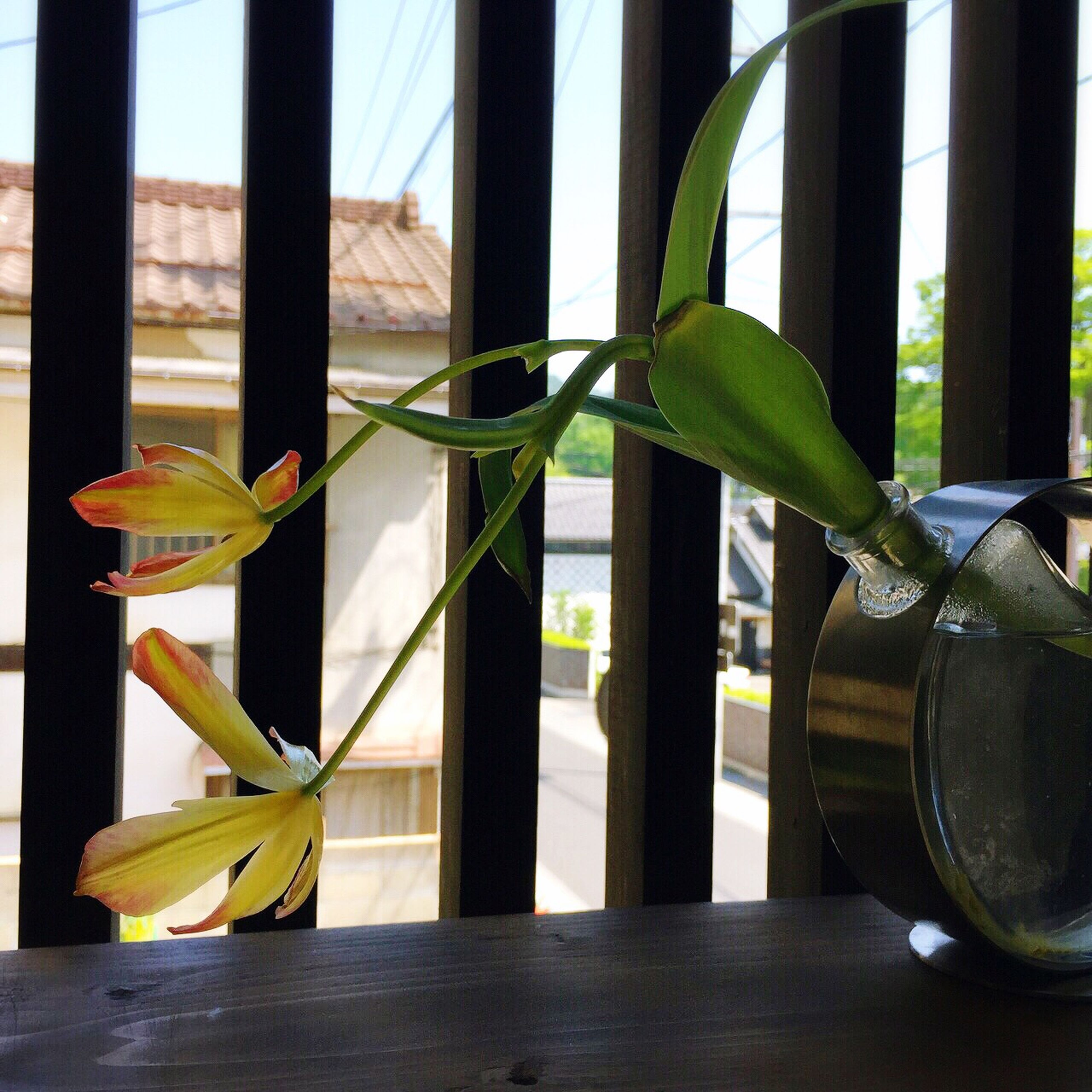 indoors, window, glass - material, table, home interior, transparent, potted plant, sunlight, chair, window sill, close-up, day, built structure, plant, architecture, vase, no people, glass, wood - material, metal
