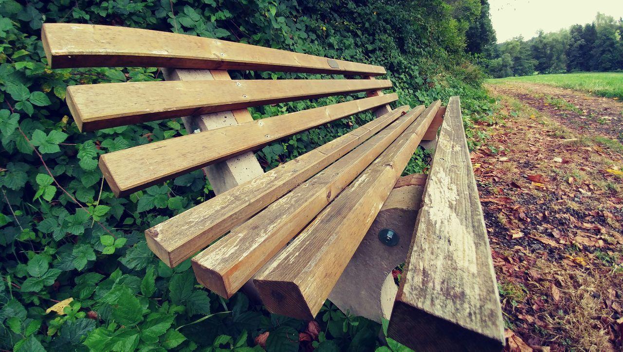 ławka Drzewo Zielen Bench Tree Green Grass Bush Krzak Krzaki Earth Droga Road Lgg5photography Smartphone Photography Smartphonephotography Lg G5 LG