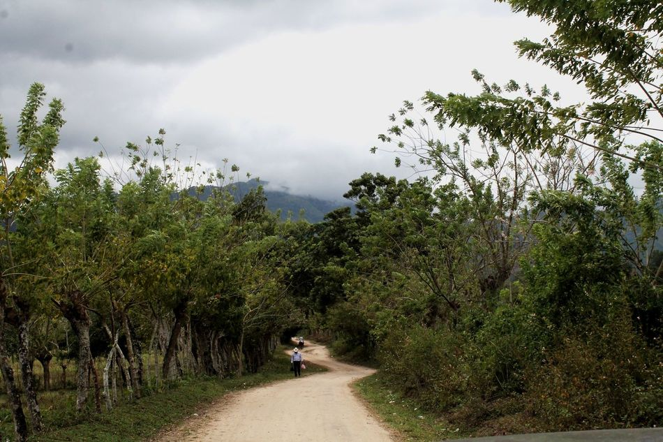 Plant Tree Road Riding Transportation One Person The Way Forward Real People Lifestyles Bicycle Outdoors Day Nature Women Sky Beauty In Nature People Motorcycle Racing Adult Honduras Nature Happiness Photography Life Canon