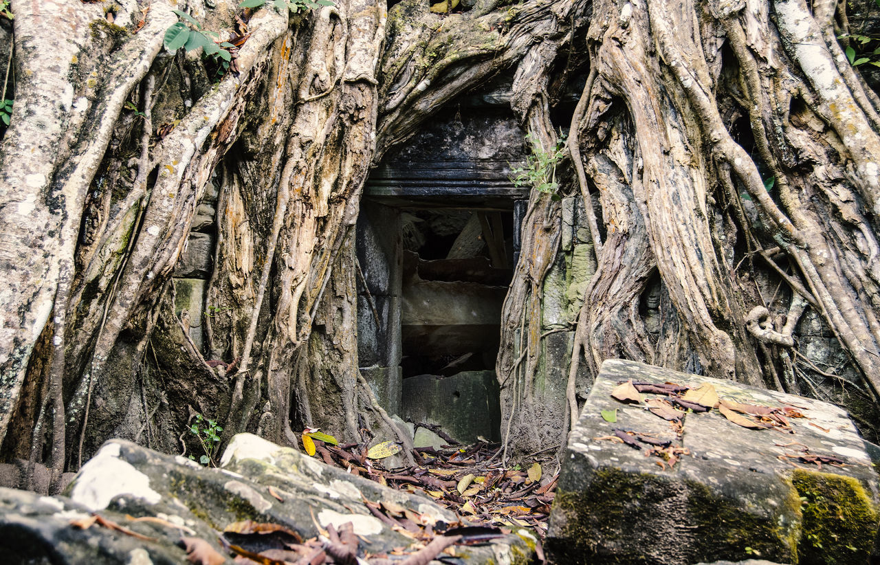 Ta Prohm, Angkor Wat, Siem Reap, Cambodia Ancient Ancient Civilization Angkor Thom Angkor Wat Architecture Built Structure Cambodia Day Exploring Forest History Holiday Jungle Nature No People Old Ruin Outdoors Rainforest Ruins Siem Reap Siemreap Spirituality Ta Prohm Travel Destinations Tree