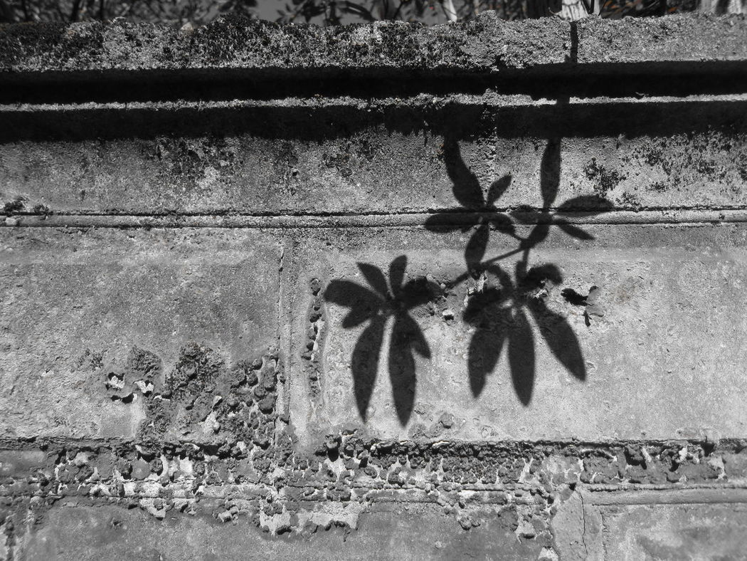 Leaves shadow Black And White Wall Branches And Leaves Concrete Crumbling Crumbling Wall Leaves Leaves Shadow Lichen Lichen On A Wall No People Shadows Silhouette Sunlight Wall Wall Art EyeEmNewHere Welcome To Black Art Is Everywhere EyeEm Selects