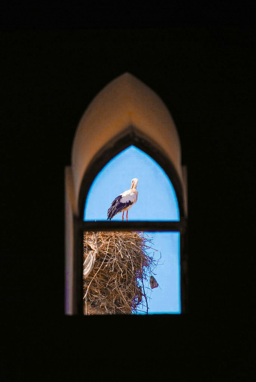 window, no people, blue, day, close-up, indoors, bird, clear sky, animal themes, sky
