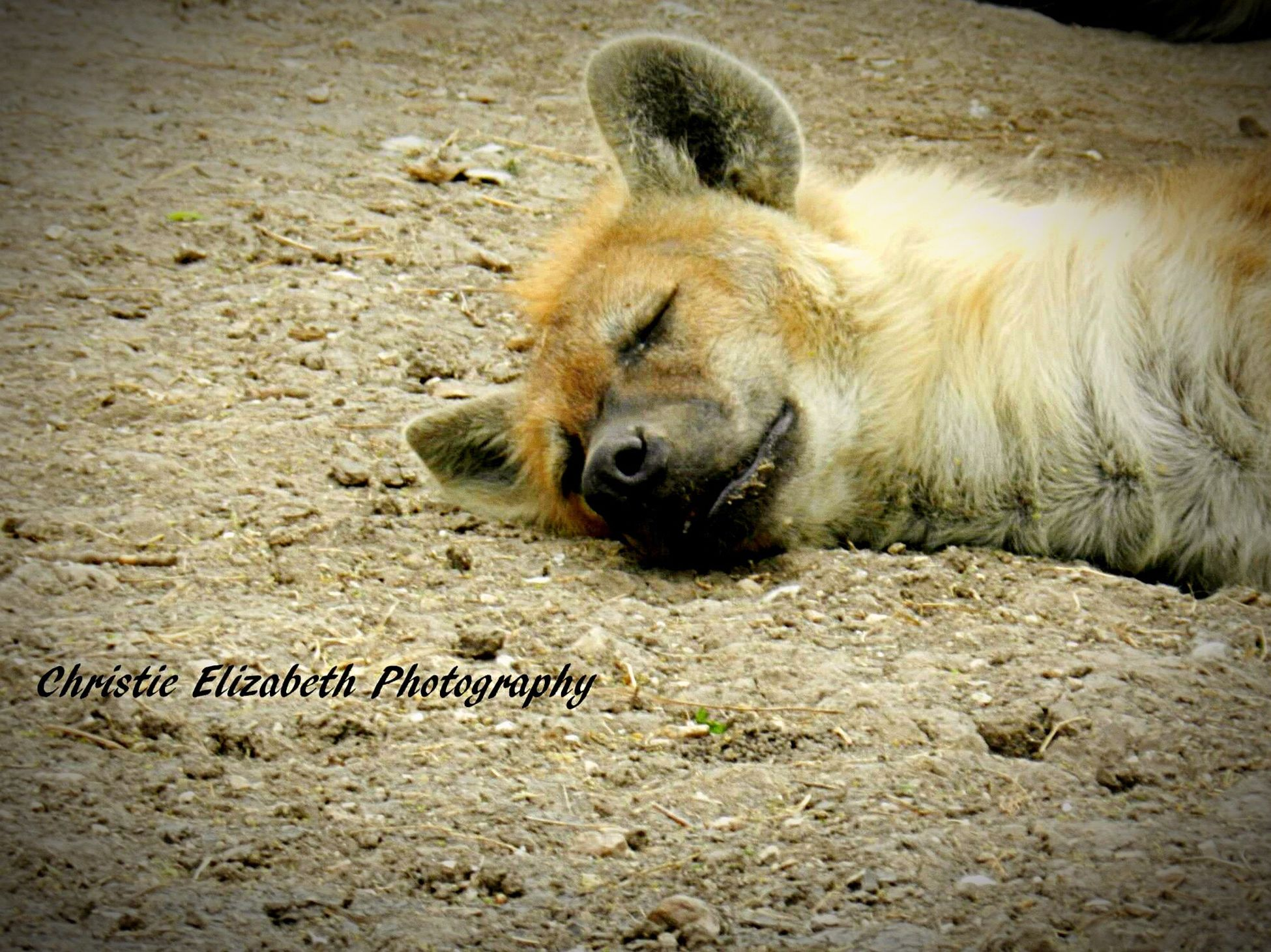 Wildlife Nature Animal Animal_collection Animal Photography Animal Love New Braunfels TX Newbraunfels New Braunfels Texas New Braunfels Summertime In NEW Braunfels Texas Animals Animals In The Wild Animal Portrait Animallovers Animal Themes Sand Animalphotography Sleeping Nature_collection Nature Photography Naturelovers Nature_perfection Nature_collection