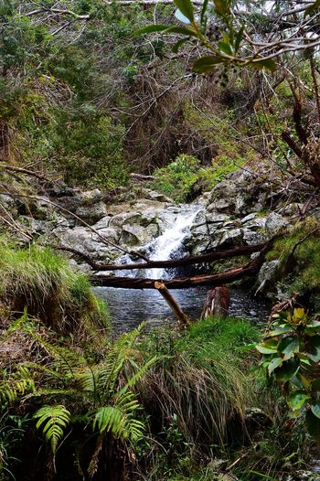 Île De La Réunion  Hicking Nature Nikon Waterfall ISO 400, 42mm, f/10, 1/320