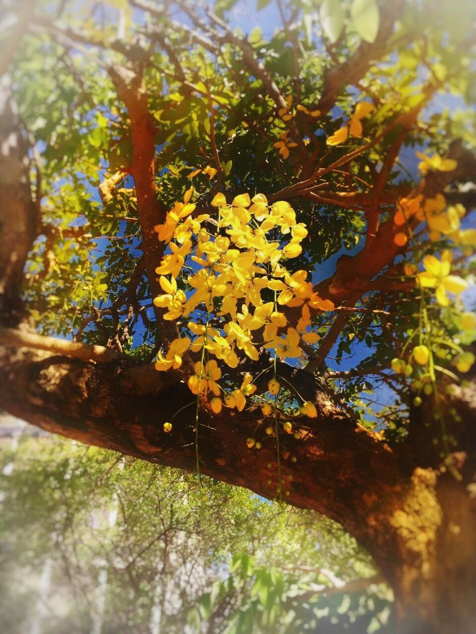 Nature Growth Selective Focus Day Flower Plant Beauty In Nature Tree Yellow EyeEm Gallery Photographer Eyemphotography Photography EyeEm Best Edits Eye4photography  Taking Photos Africa Beautiful Photo Eyem Nature Lovers  Travel Destinations Beauty In Nature Nature Awesome
