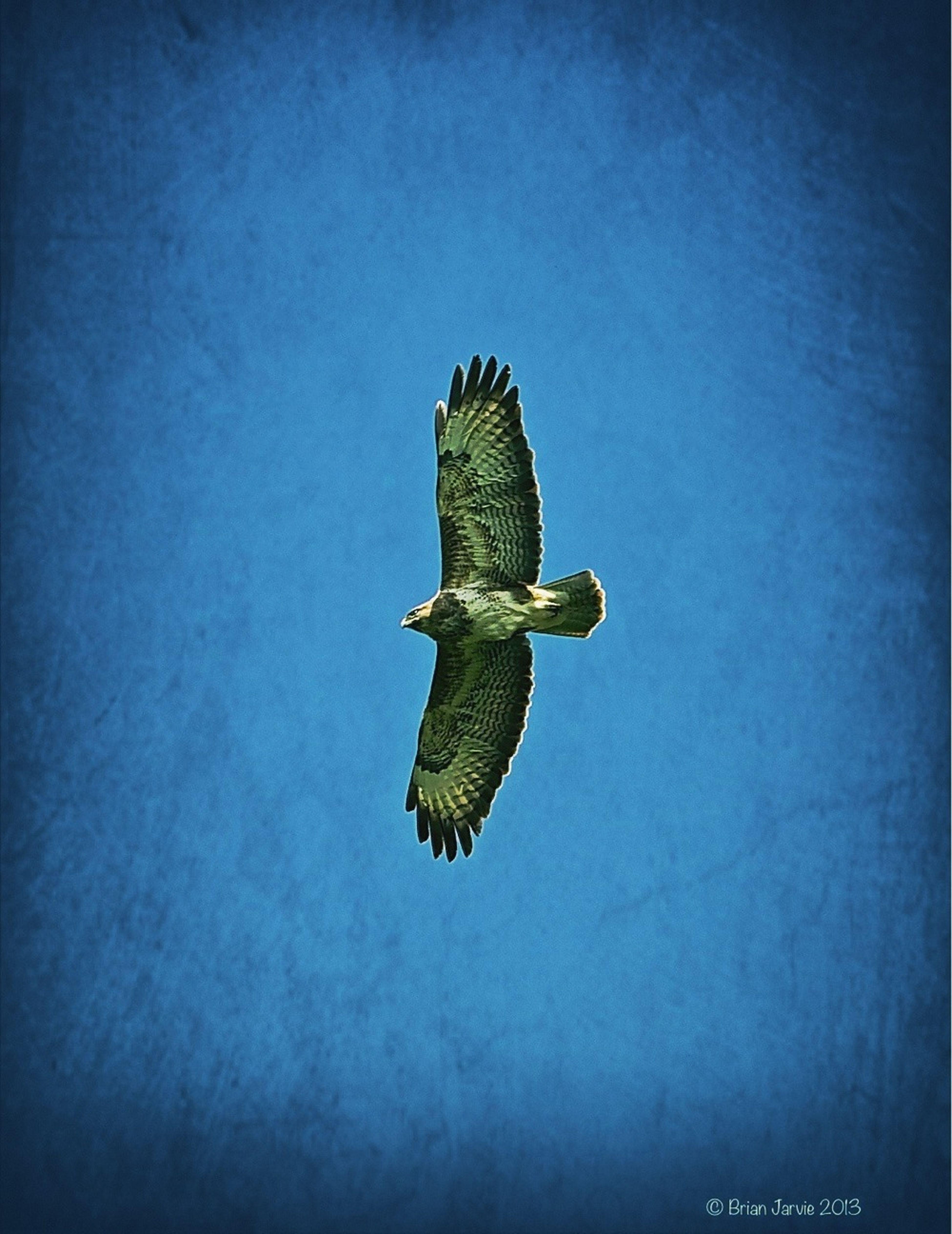 Hunter Hawk Bird Of Prey EyeEm Nature Lover