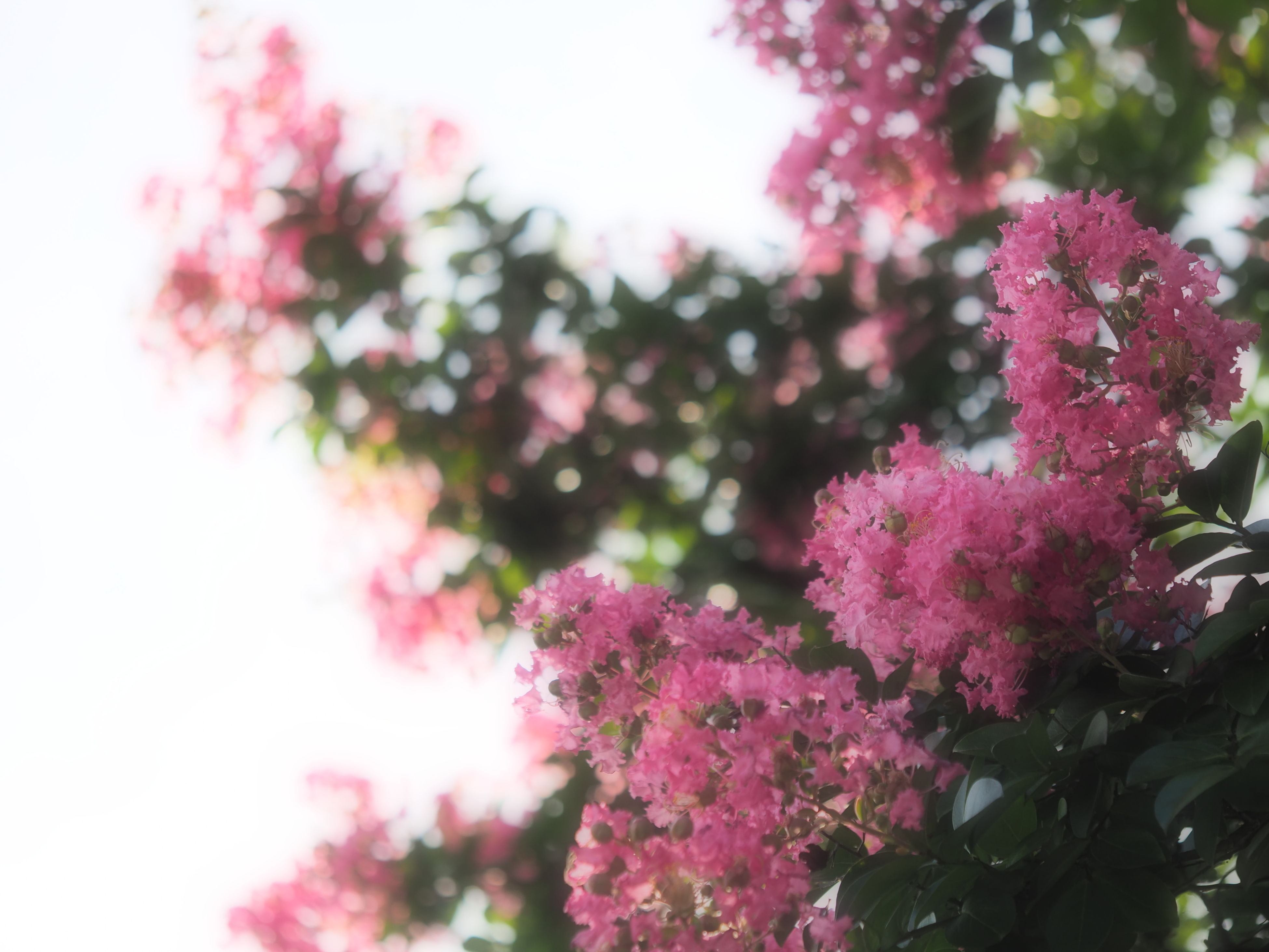 pink color, growth, flower, beauty in nature, nature, no people, fragility, plant, tree, freshness, day, outdoors, close-up, focus on foreground, blooming, springtime, branch, flower head, sky