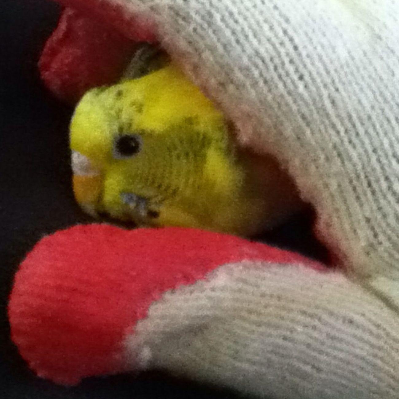 One Of My Birdss :)