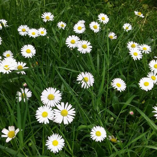 Grass And Flowers Simple And Beautiful Amazing Creation Flower Nature Freshness Outdoors Growth Beauty In Nature