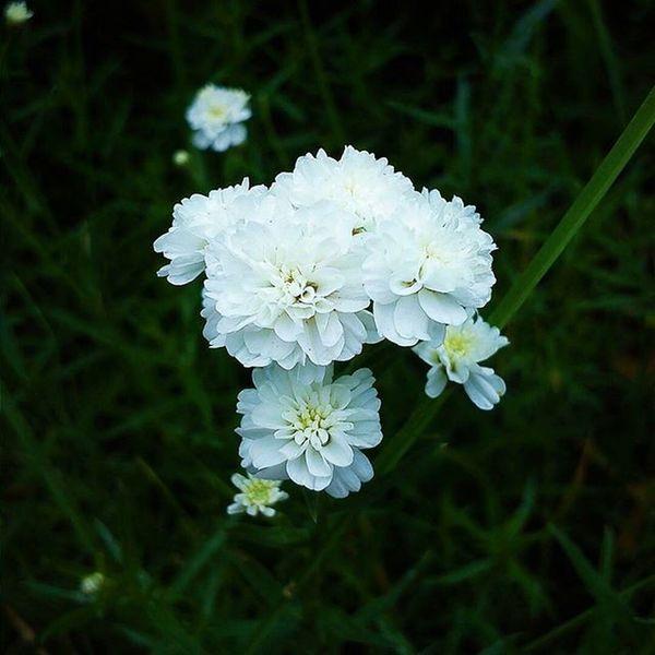 🌸 VSCO Vscocam Vscogood Vscoflowers Vscorussia Flowers White