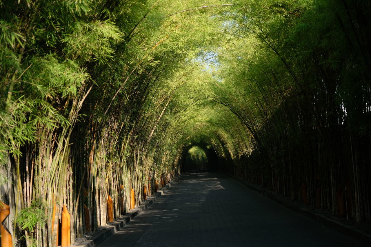 the way forward, diminishing perspective, no people, tree, green color, nature, day, tranquility, growth, plant, outdoors, beauty in nature