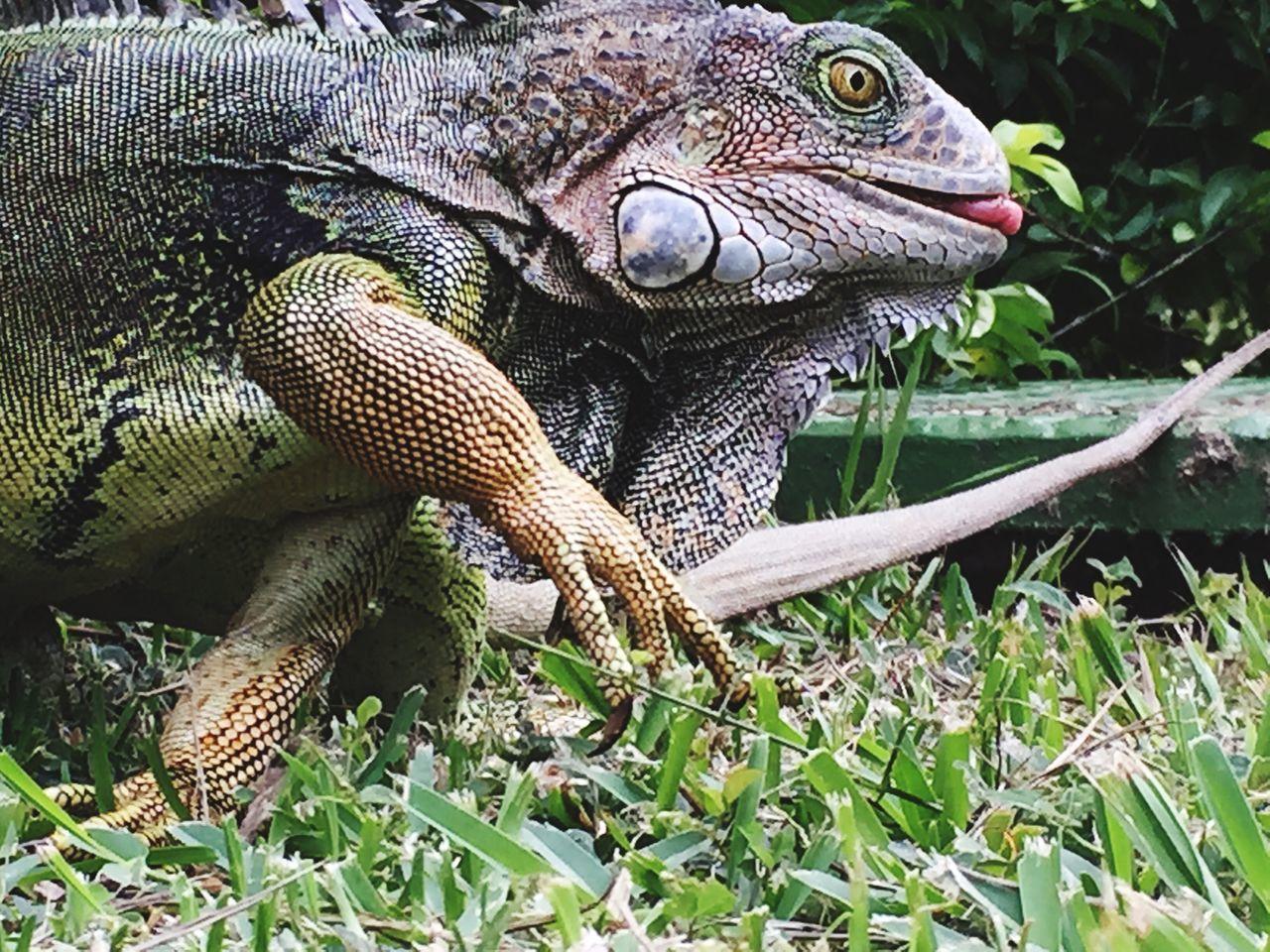 Beautiful stock photos of costa rica, Animal Markings, Animal Themes, Animal Wildlife, Animals In The Wild