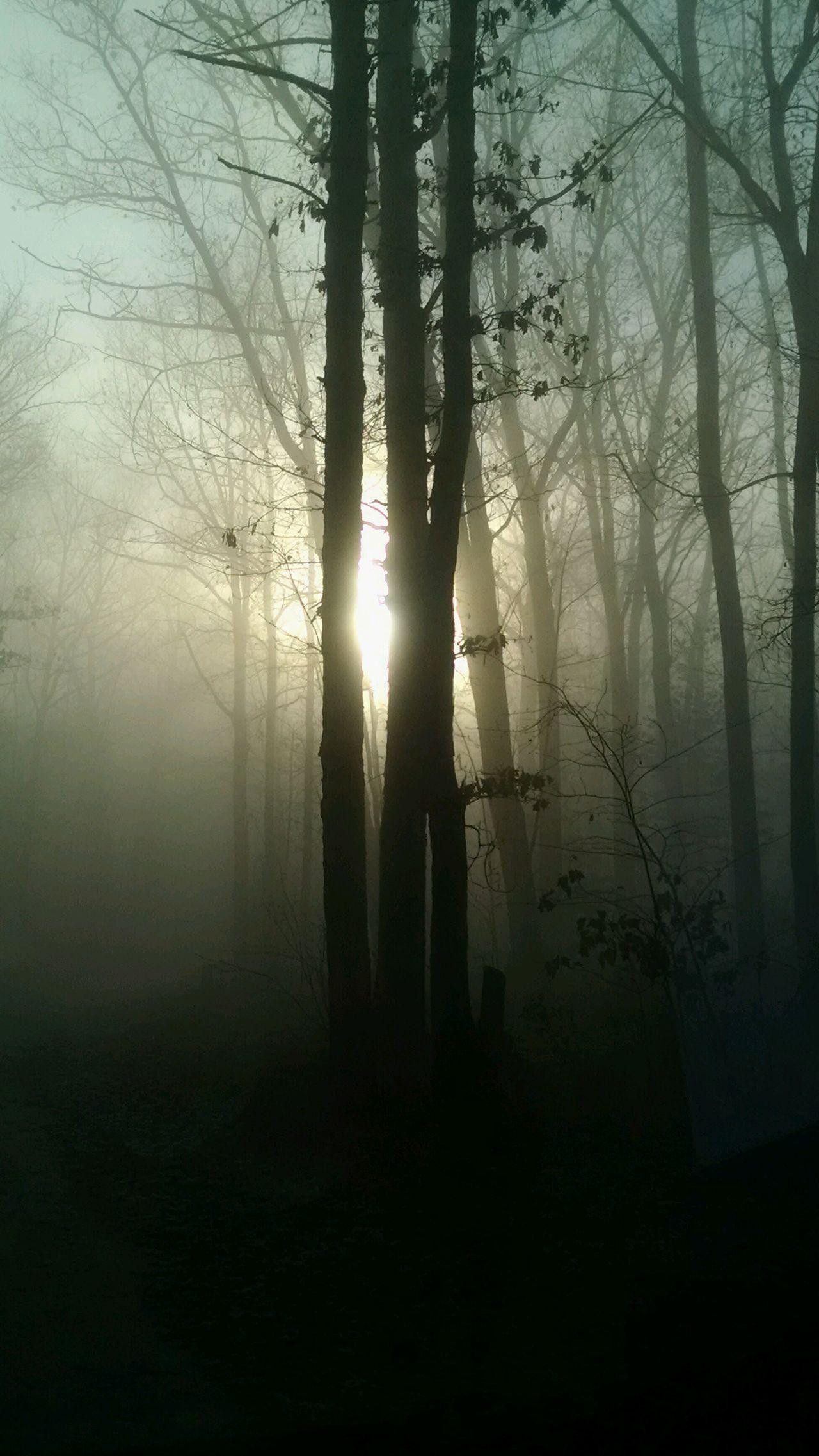 Morning Fog EyeEm Best Shots Eyeem Marketplace Eyeem Trending Eyeem Nature Natural Landscape Nature Trees Popular The 2016 EyeEm Awards