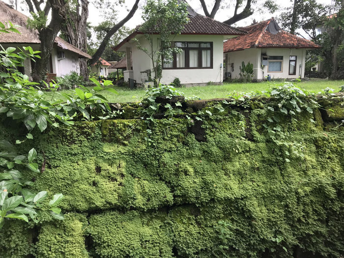 Bali, Indonesia Architecture Building Exterior Built Structure Day Farmhouse Freshness Green Color House Moss Nature No People Outdoors Plant Tree