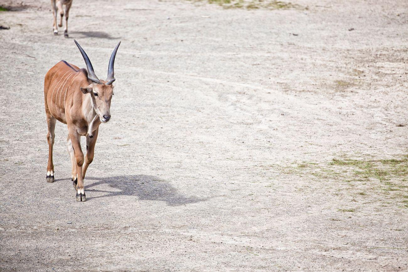 Beautiful stock photos of deer, Brown, Horizontal Image, Netherlands, Pastel