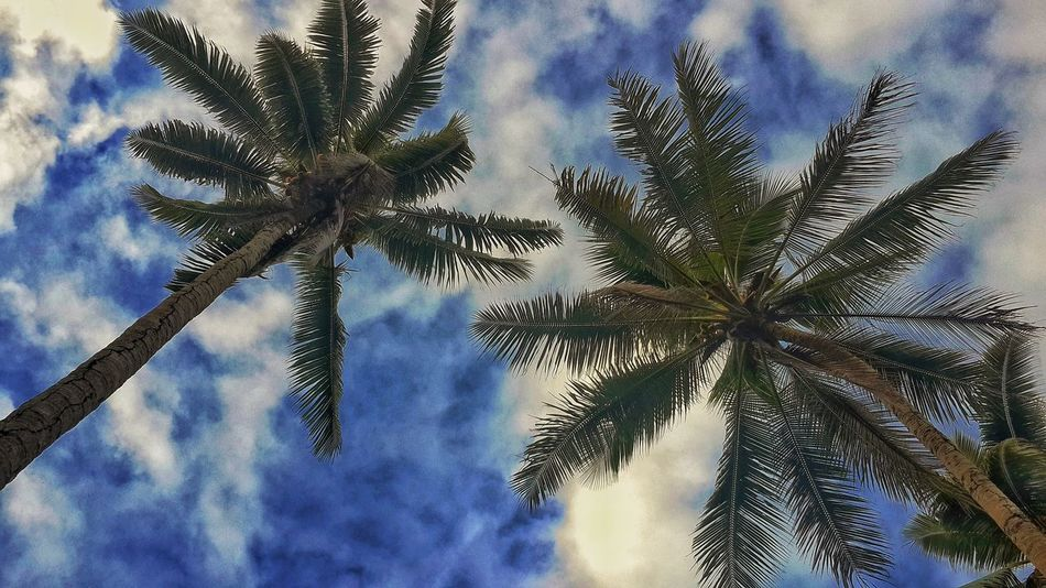 Check This Out Coconut Trees Enjoying Life Solomon Islands Taking Photos Relaxing Hanging Out