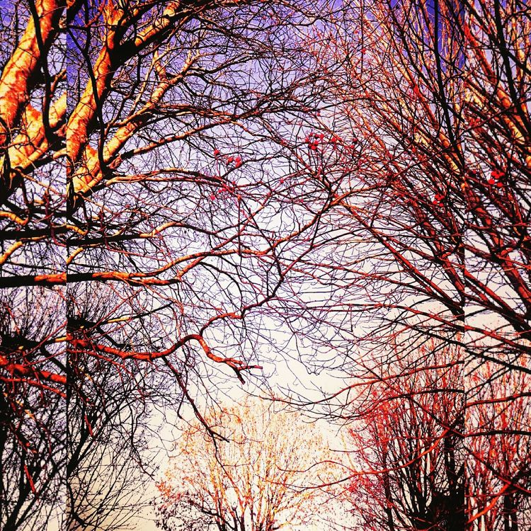 The many colours of winter❗ Urban Views Winter Trees Sunny Winters Day Colours Of Winter Blue Sky Red Berries Bare Braches Beauty In Nature Outdoors Sky Nature In The City Artistic Photography Suns Glow No People Growth City St Pauls Winter 2017 Bristol Uk
