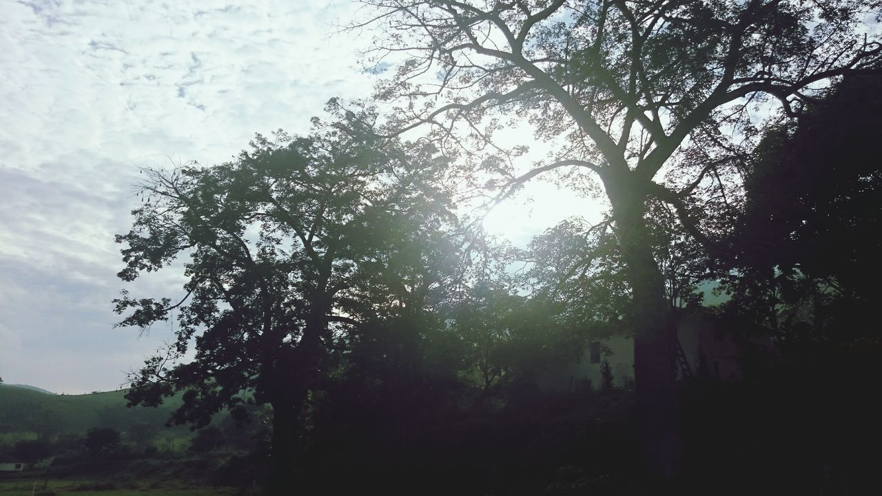 tree, nature, beauty in nature, no people, day, tranquil scene, tranquility, scenics, growth, sky, forest, outdoors, low angle view, branch, landscape