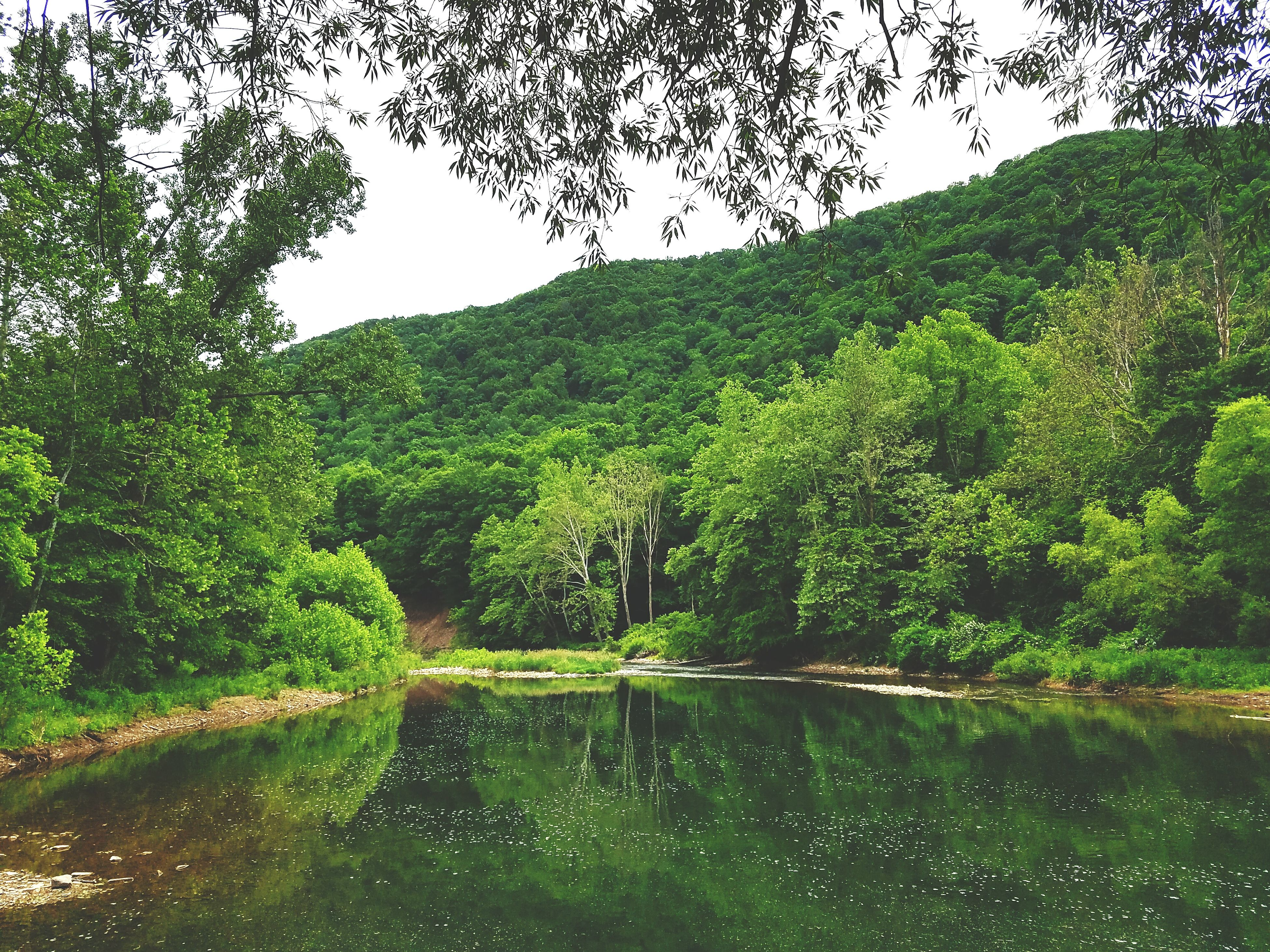 tree, water, tranquility, tranquil scene, green color, beauty in nature, growth, scenics, nature, waterfront, lush foliage, river, reflection, clear sky, lake, green, idyllic, forest, day, mountain