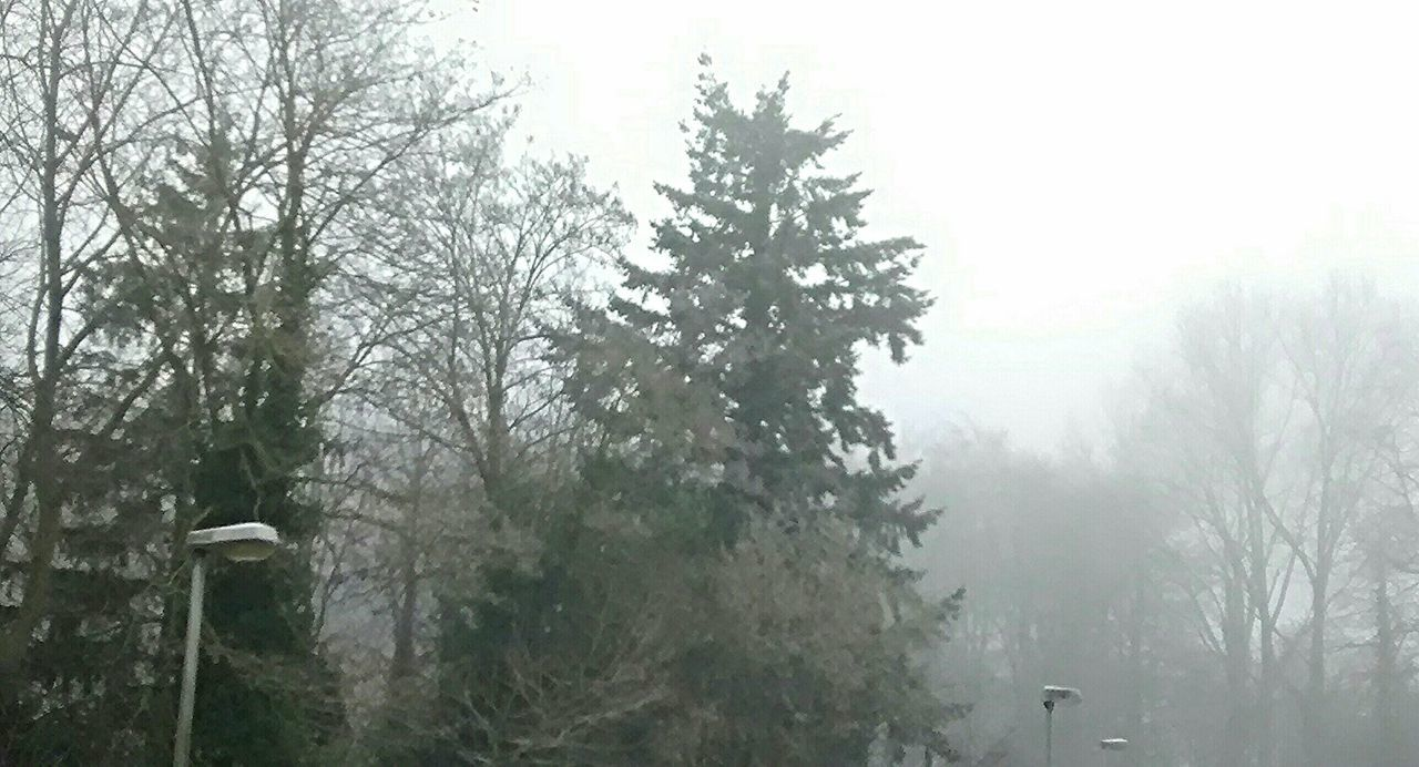tree, fog, nature, day, no people, weather, tranquility, beauty in nature, tranquil scene, outdoors, scenics, branch, mist, growth, landscape, bare tree, hazy, sky