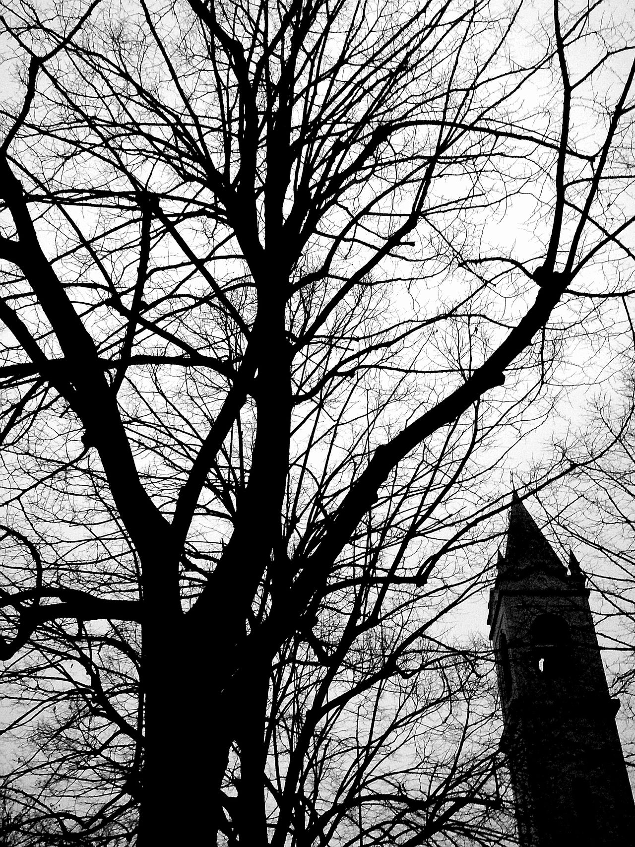 Low Angle View Tree Branch Sky No People Nature Outdoors Day Architecture City Black And White Close-up People Of EyeEm The Street Photographer - 2016 EyeEm Awards The Great Outdoors - 2016 EyeEm Awards TheWeek On EyEem The Photojournalist - 2016 EyeEm Awards The 2016 EyeEm Awards The Eyeem Award 2016 TheWeekOnEyeEM Igersworldwide The Week Of Eyeem Dark Dramatic Sky Igersfc