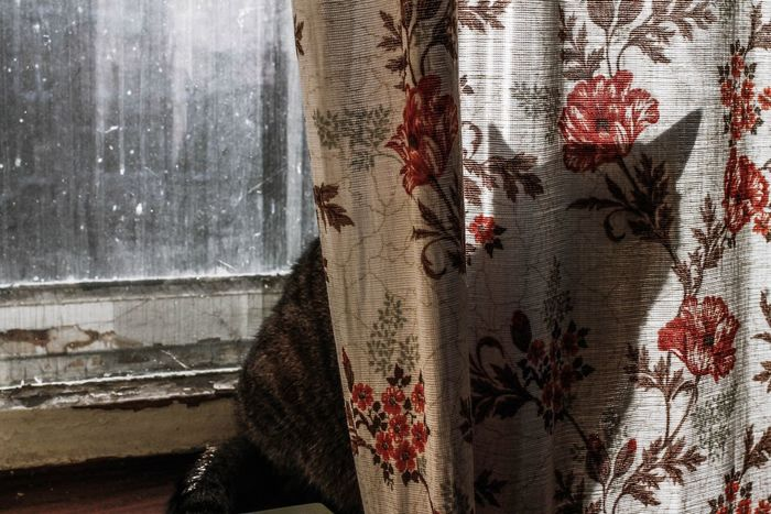Close-up Window Curtain Indoors  Day Cat Shadows & Lights Shadow Photography Art Is Everywhere