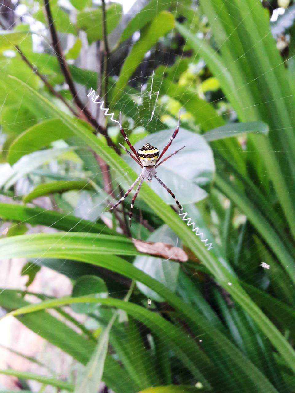 Close-Up Of Spider On Web Against Plant