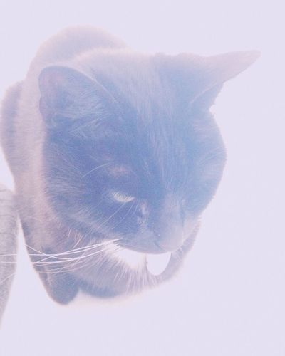 🐈 One Animal No People