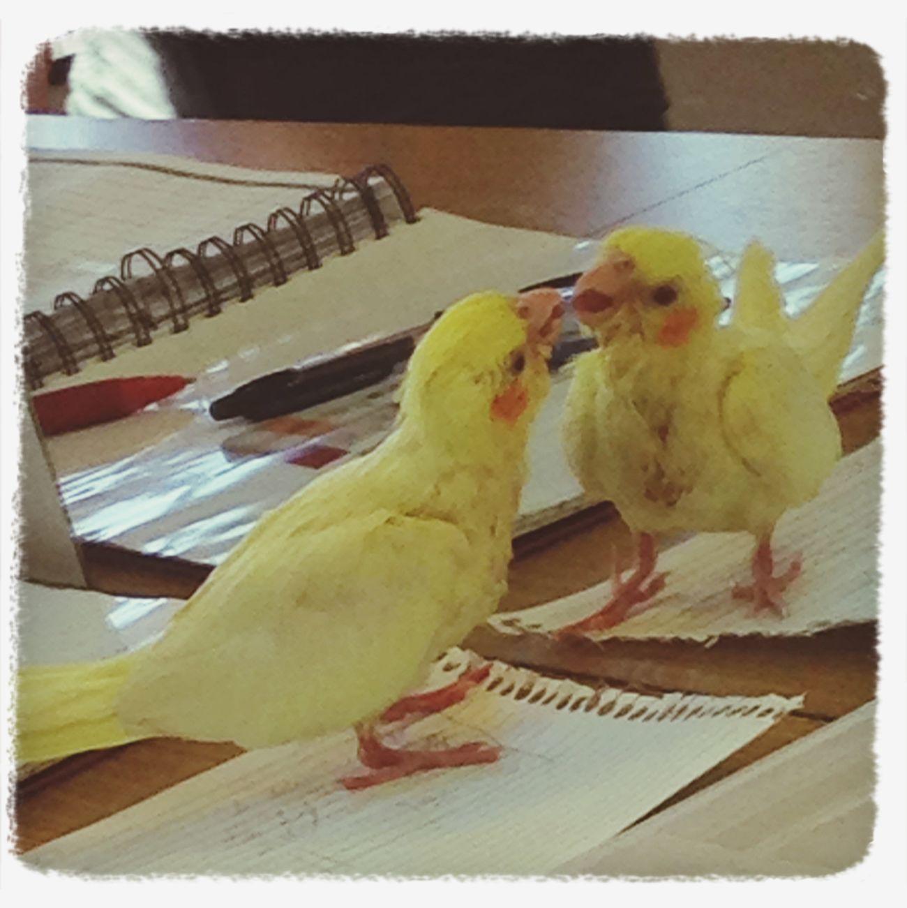 Bird Yellow Lovely Reflex