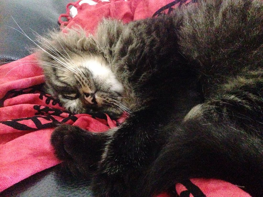 ?❤️ The Purist (no Edit, No Filter) Homesweethome Loveanimals Kitten Sleeping Patato