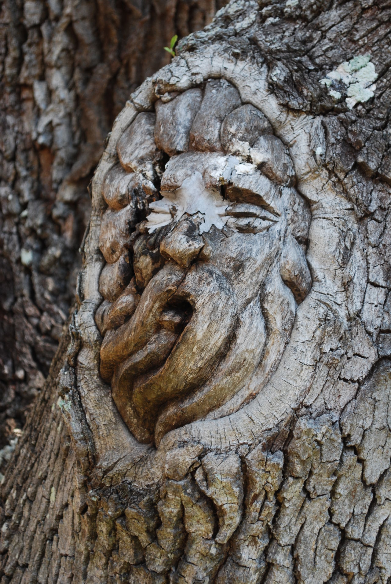 Tree Spirit Nature Art No People Tree Tree Spirit