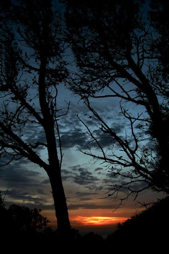 Beautiful Portugal Beauty In Nature Casa Da Guia Cascais Cascais Portugal Cloud - Sky Dramatic Sky Guincho Guincho, Portugal Landscape Nature Outdoors Scenics Silhouette Sky Sunset Sunset Portugal Sunset Silhouettes Tree