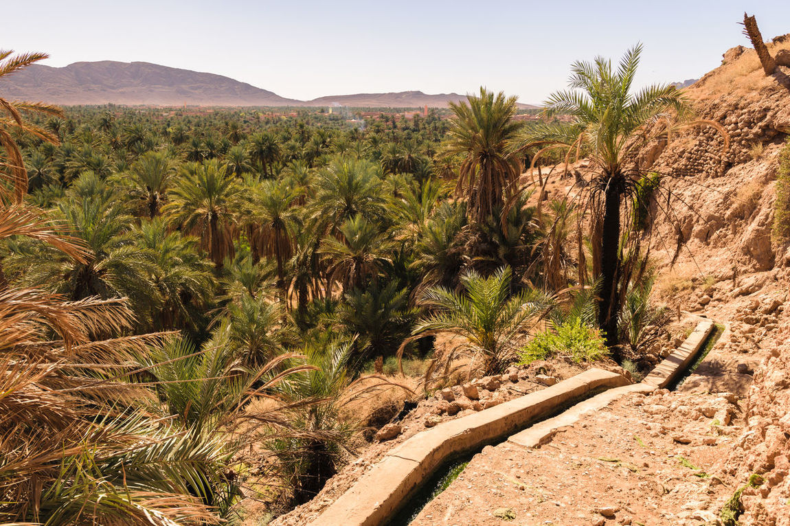 Panoramic view over the oasis of date palms in Figuig in Morocco. In the distance you can see a small mountain that is very close to the Algerian border. Algerian Arid Climate Border Day Desert Figuig Green Growth Landscape Morocco Mountain Nature No People Oasis Outdoors Palm Palm Tree Panorama Plant Sand Scenics Sky Solitude Travel Destinations Tree