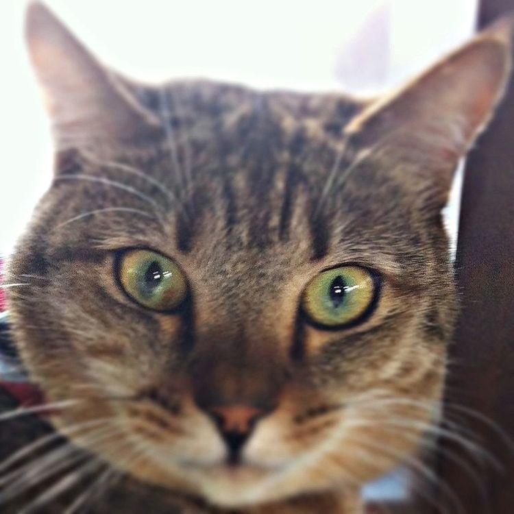 ネコ Cat