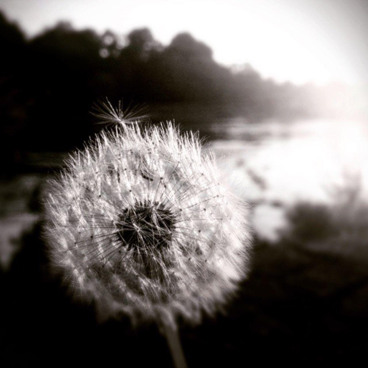 Seemless. Water Remember Sittingwaitingwishing Sun Ifihadaboat Picknick Peach Higgs Donau Monochrome Photography