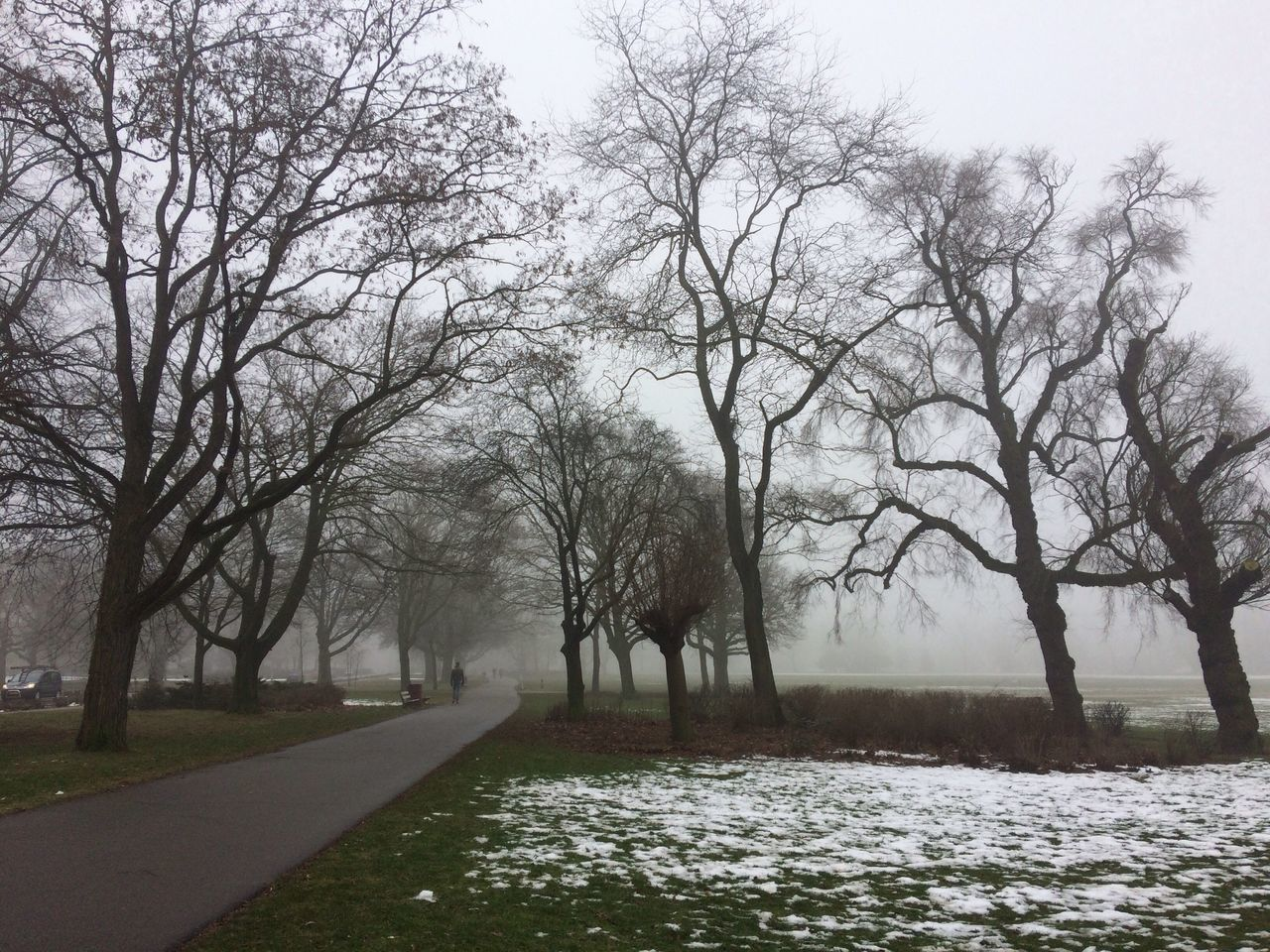 Tree Nature Bare Tree Tranquility Tranquil Scene Scenics Beauty In Nature Branch No People Outdoors Sky Day Foggy Foggy Weather Foggy Landscape Trees In The Fog Lone Walker Miles Away