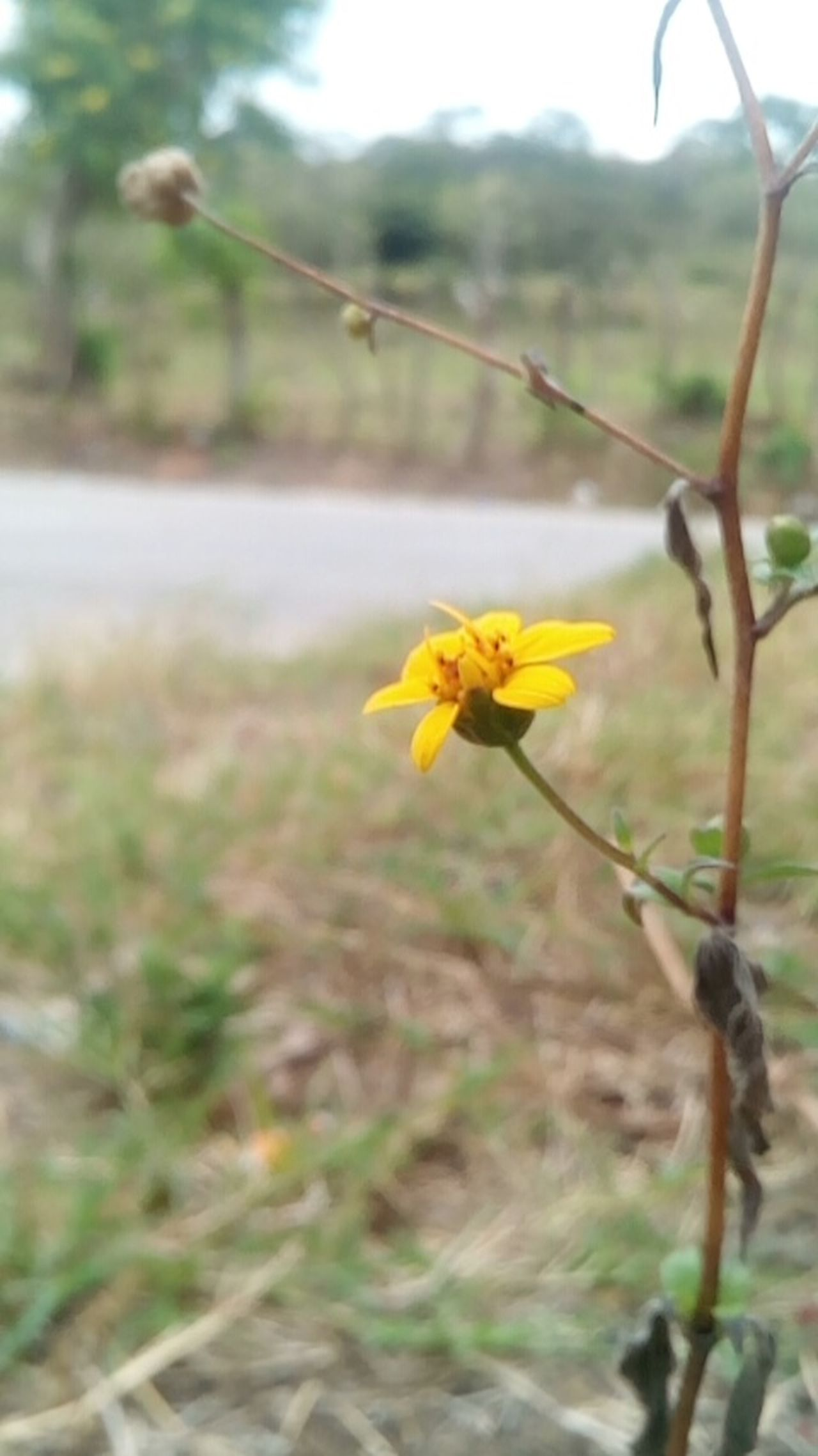 Flower Yellow No People Beauty In Nature Fragility Day Flower Head Flor Amarillo Belleza