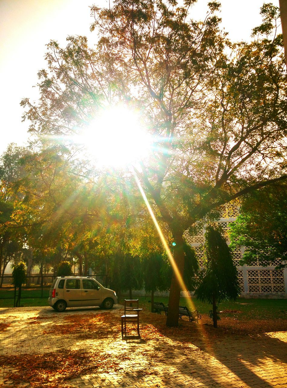 sunbeam, sunlight, tree, sun, lens flare, nature, no people, outdoors, growth, day, sunshine, beauty in nature, sky, rope swing