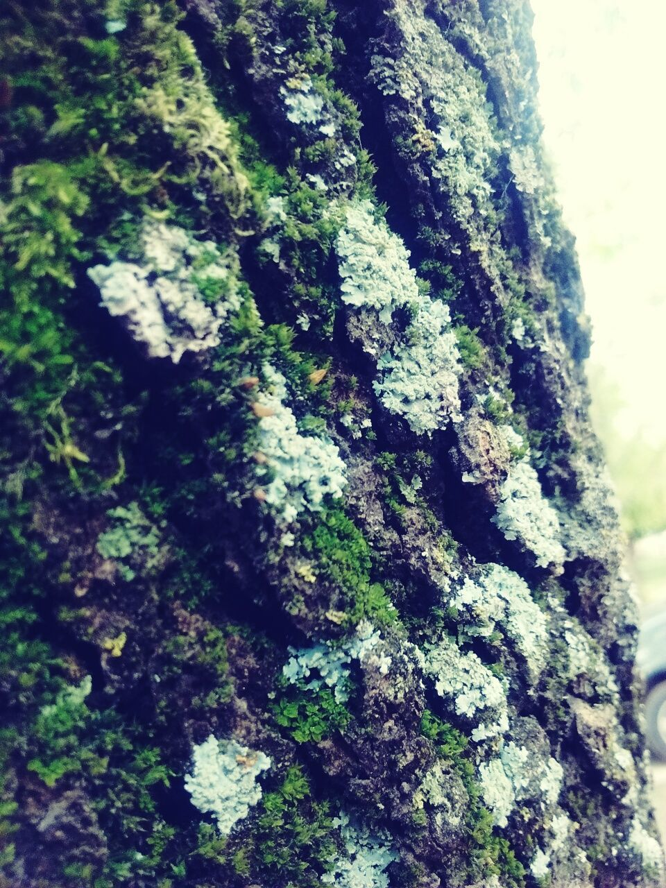 tree trunk, tree, textured, moss, rough, close-up, day, nature, bark, no people, lichen, growth, focus on foreground, outdoors
