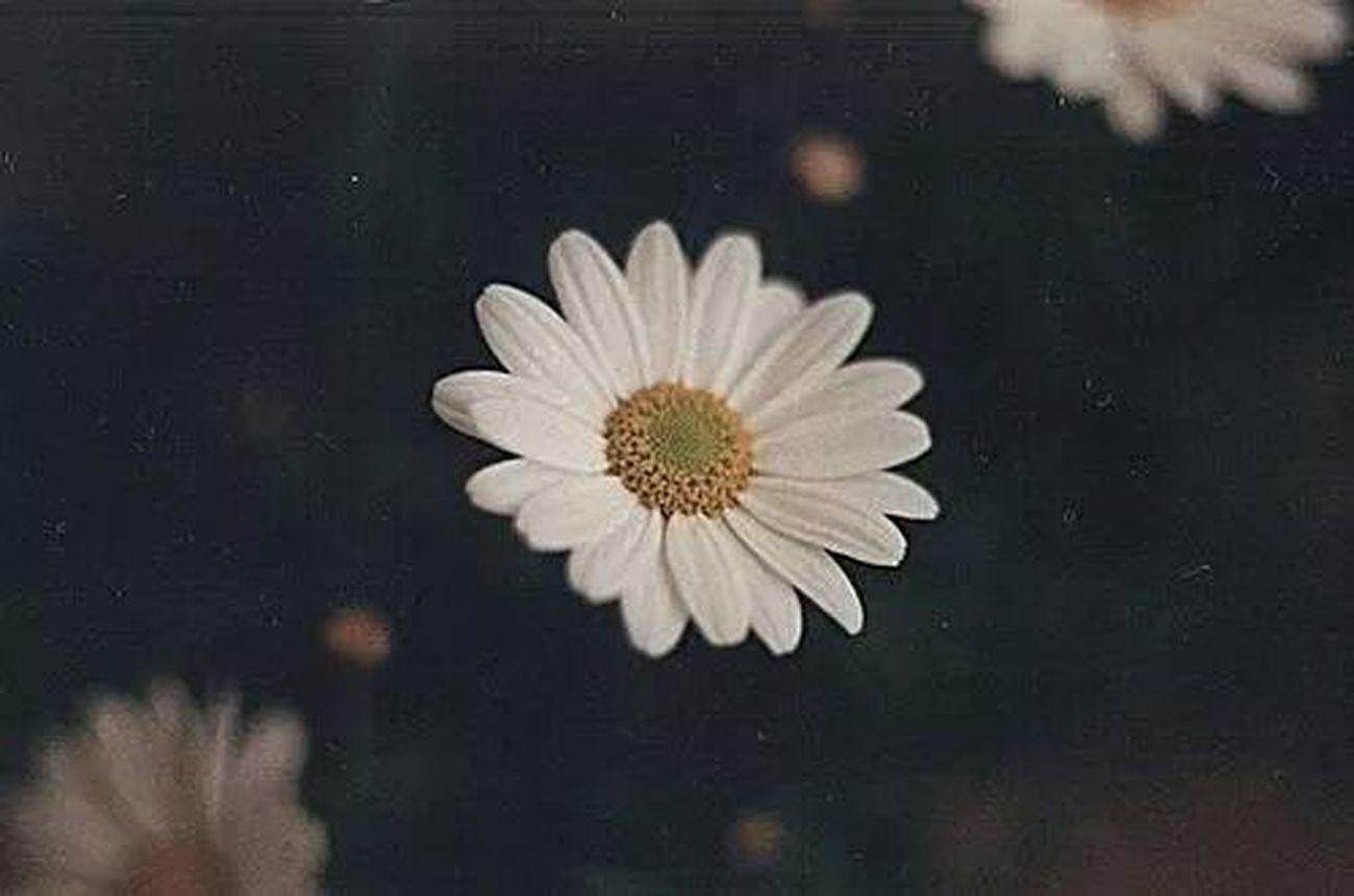 Flower Creepy Wonder Dre▲m