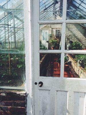 Window Architecture Transparent Throughthewindow Throughthelookingglass Lookinside Lookinginside Plants Garden Gardening