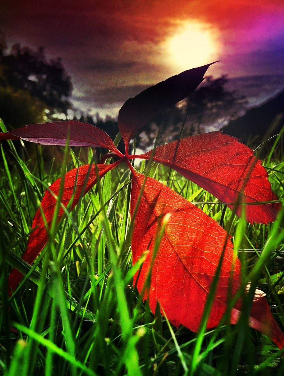 Colors Leaves Nature Autumn