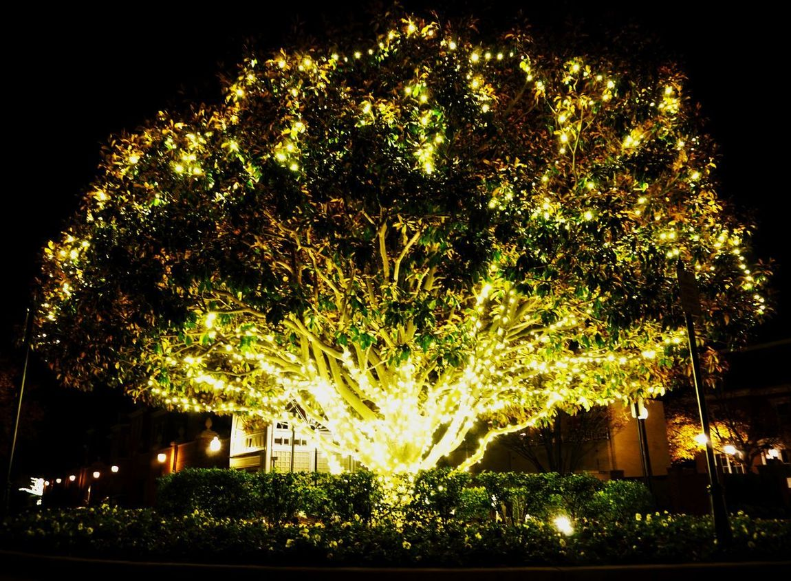 Tree Lit Up With Lights Illuminated Celebration Outdoor Photography Glowing Nightphotography Light In The Darkness Be. Ready. Alexandria, VA Old Town Alexandria Sonyalpha AI Now