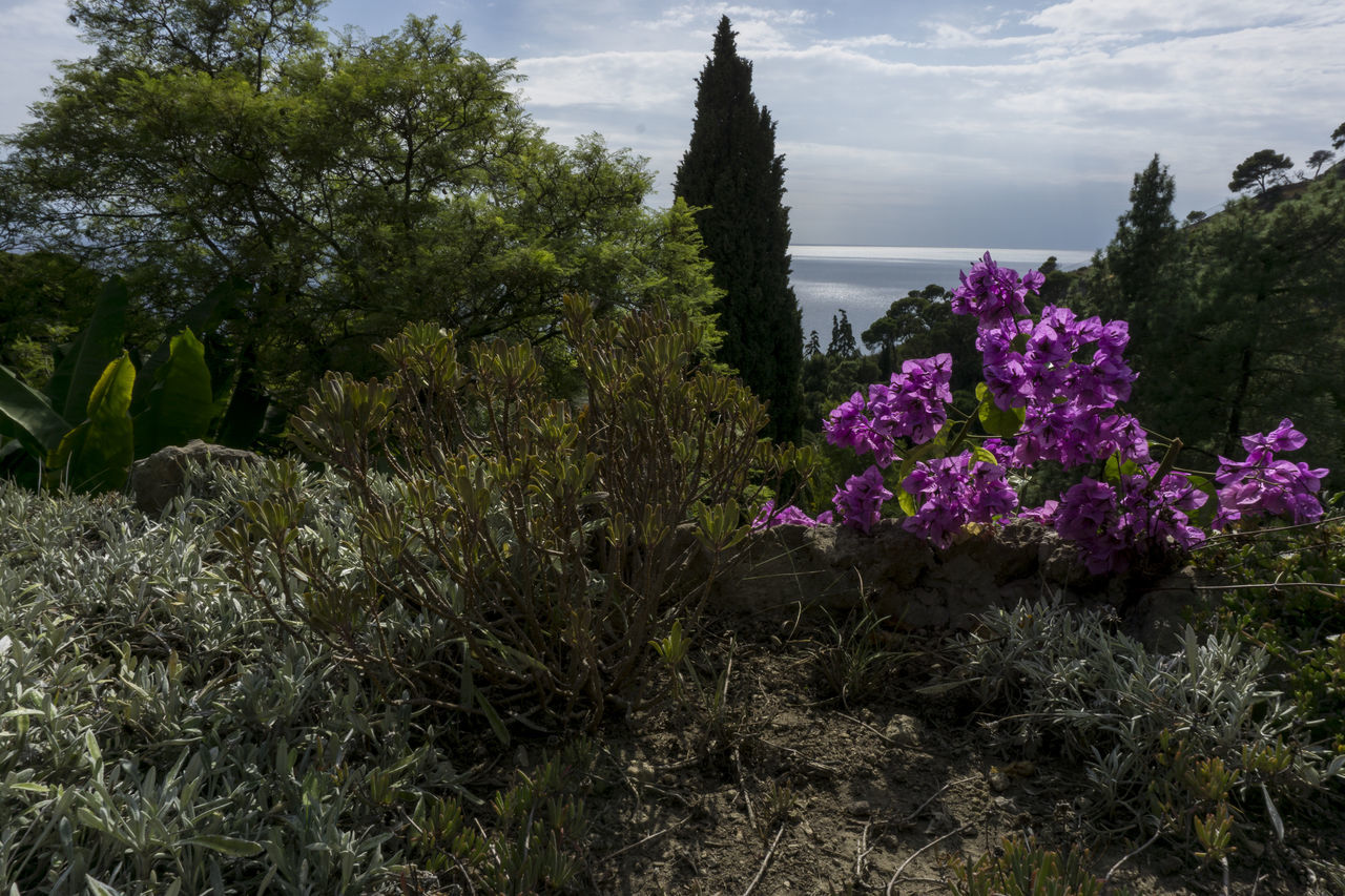 italia Beauty In Nature Blossom Day Flower Flower Head Fragility Freshness Growth Italia Italie Italien Italy Italy❤️ Italy🇮🇹 Nature No People Outdoors Plant Purple Riviera Scenics Sea Sky Tree Ventimiglia