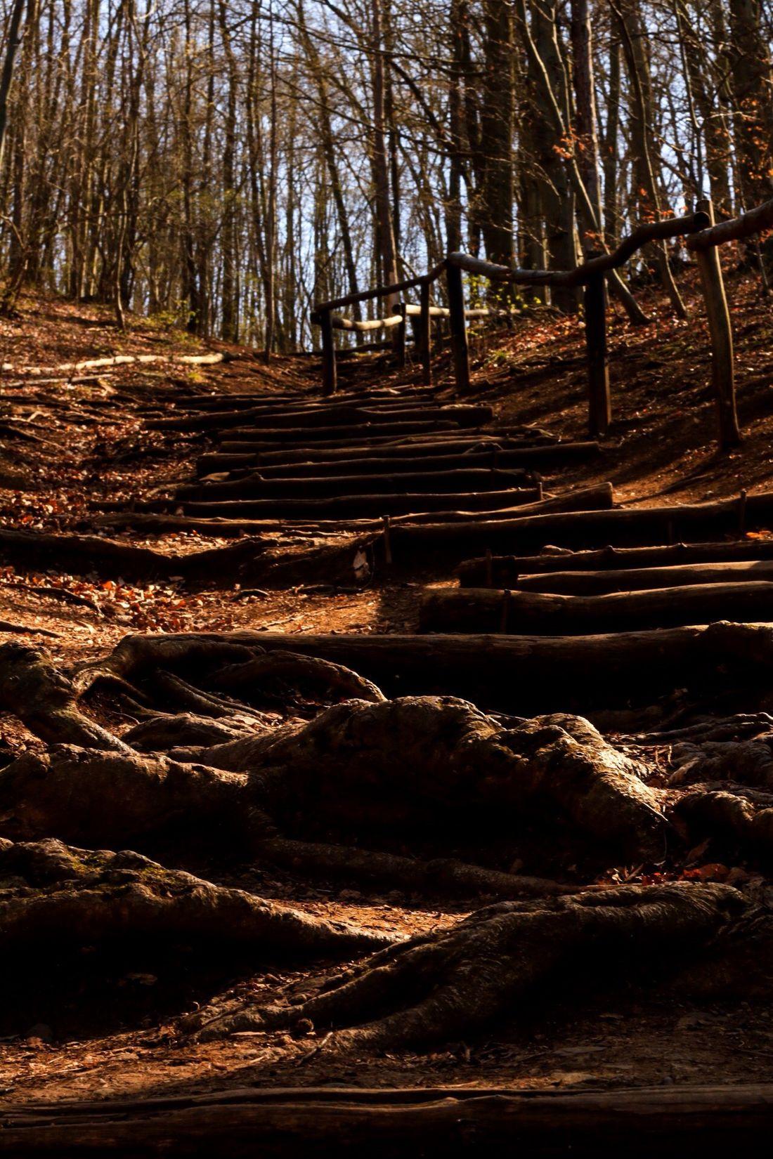 Stairway To Heaven ? Czech Republic Svatyjanpodskalou Nature Forest Hot Weather Outdoors