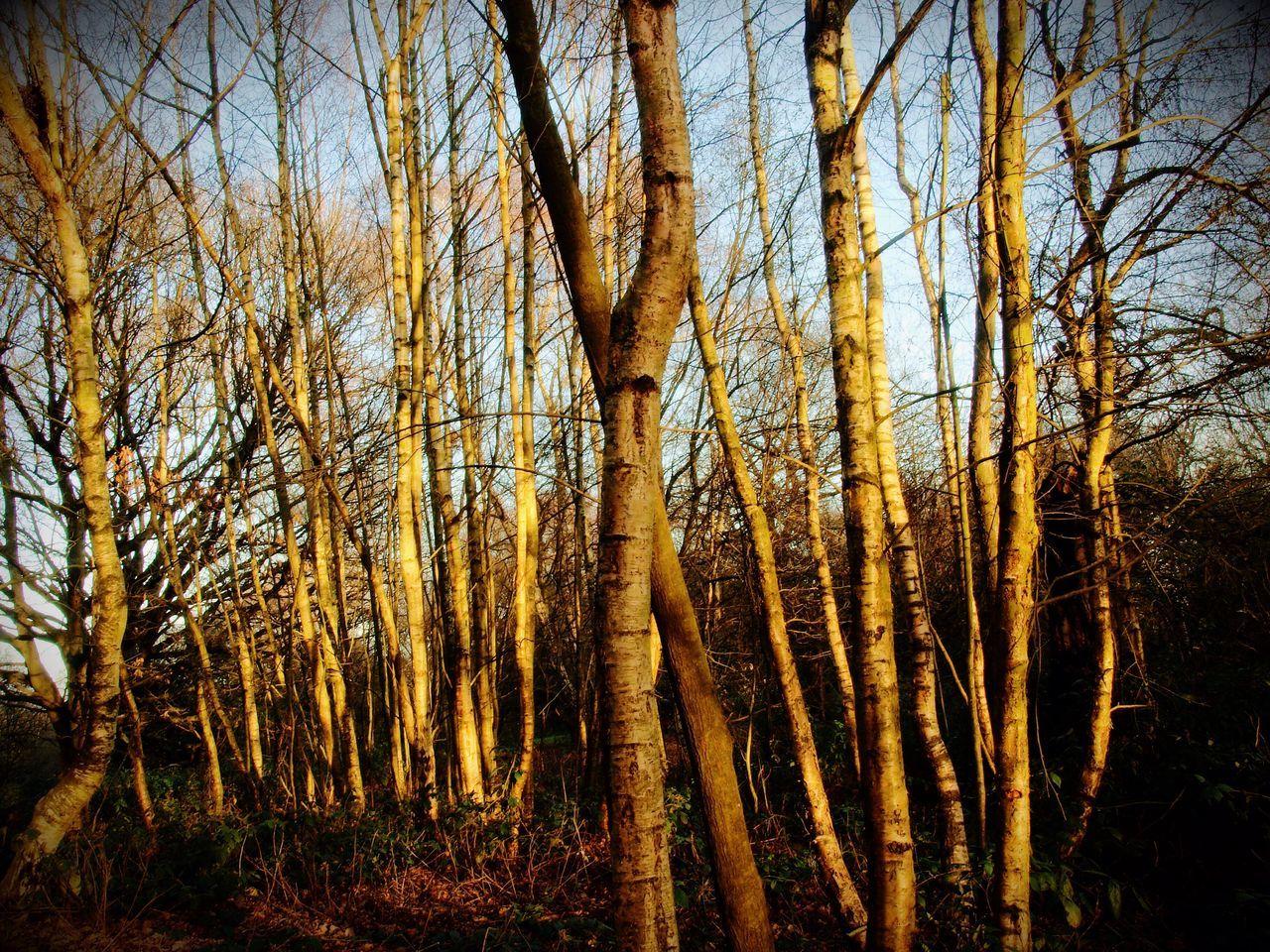 Tree Trunk Nature Forest WoodLand Tree Zuiko Olympus Nature TreePorn Stevesevilempire Steve Merrick Hampstead Heath