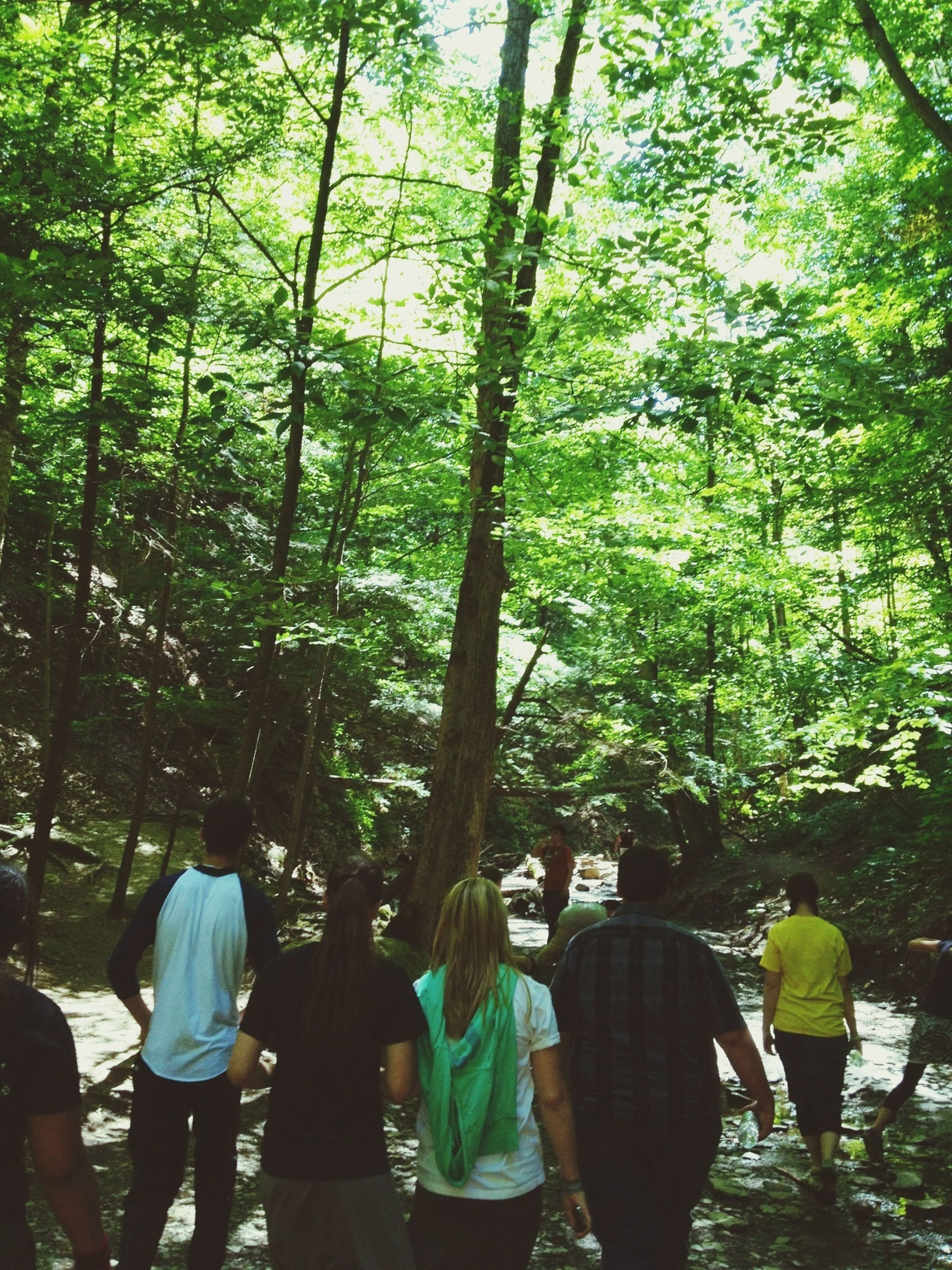tree, lifestyles, rear view, leisure activity, men, person, togetherness, walking, growth, casual clothing, forest, full length, branch, nature, bonding, love, green color, large group of people