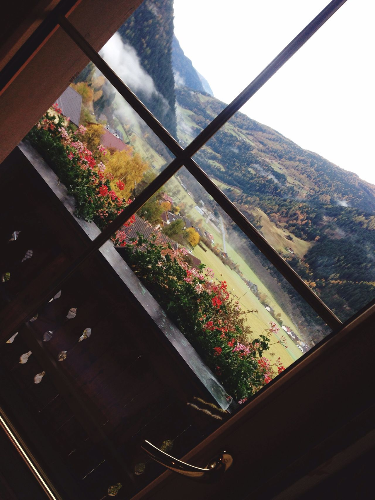 Nice Atmosphere Beautiful Surroundings Relaxing Resting Flower Window Door