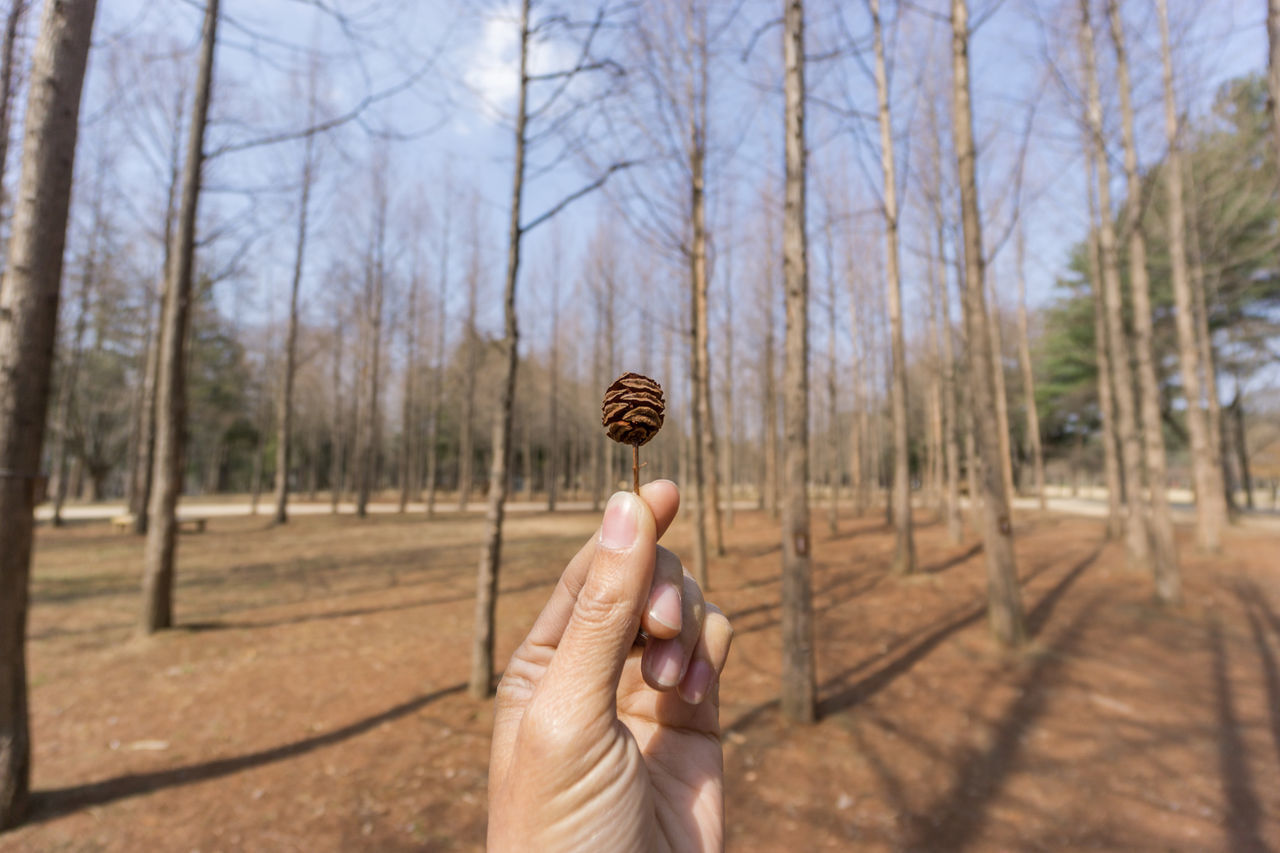 human hand, holding, human body part, bare tree, one person, tree, real people, ice cream cone, outdoors, day, nature, sky, people